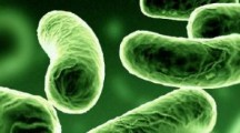 El consumo regular de probióticos reduce la presión arterial
